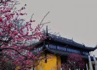 春天从红梅开始