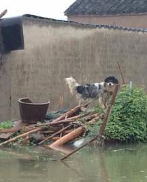 家中因暴雨受损的常州人 来领一笔赔偿金