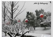 海边逛:雪后红梅公园