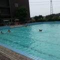 牟家农业旅游观光园2个游泳池被令停业