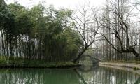 春意盎然新西湖 ——图游杭州