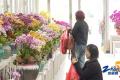 满园春色 特色花木产业生机勃勃