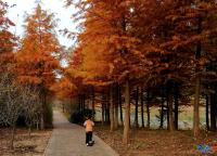 秋季的新龙生态林
