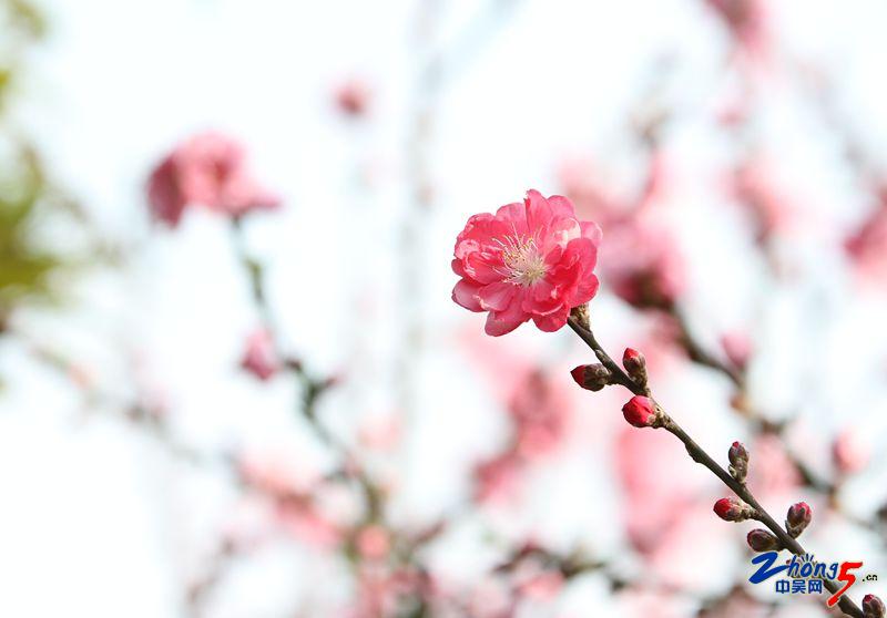 IMG_8983_副本.jpg