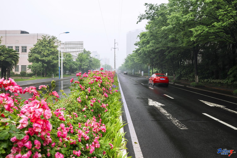 .(春季)题目:珠江东路。地点:常州市珠江东路,拍摄者:胡乾,电话:13906118235.j.jpg