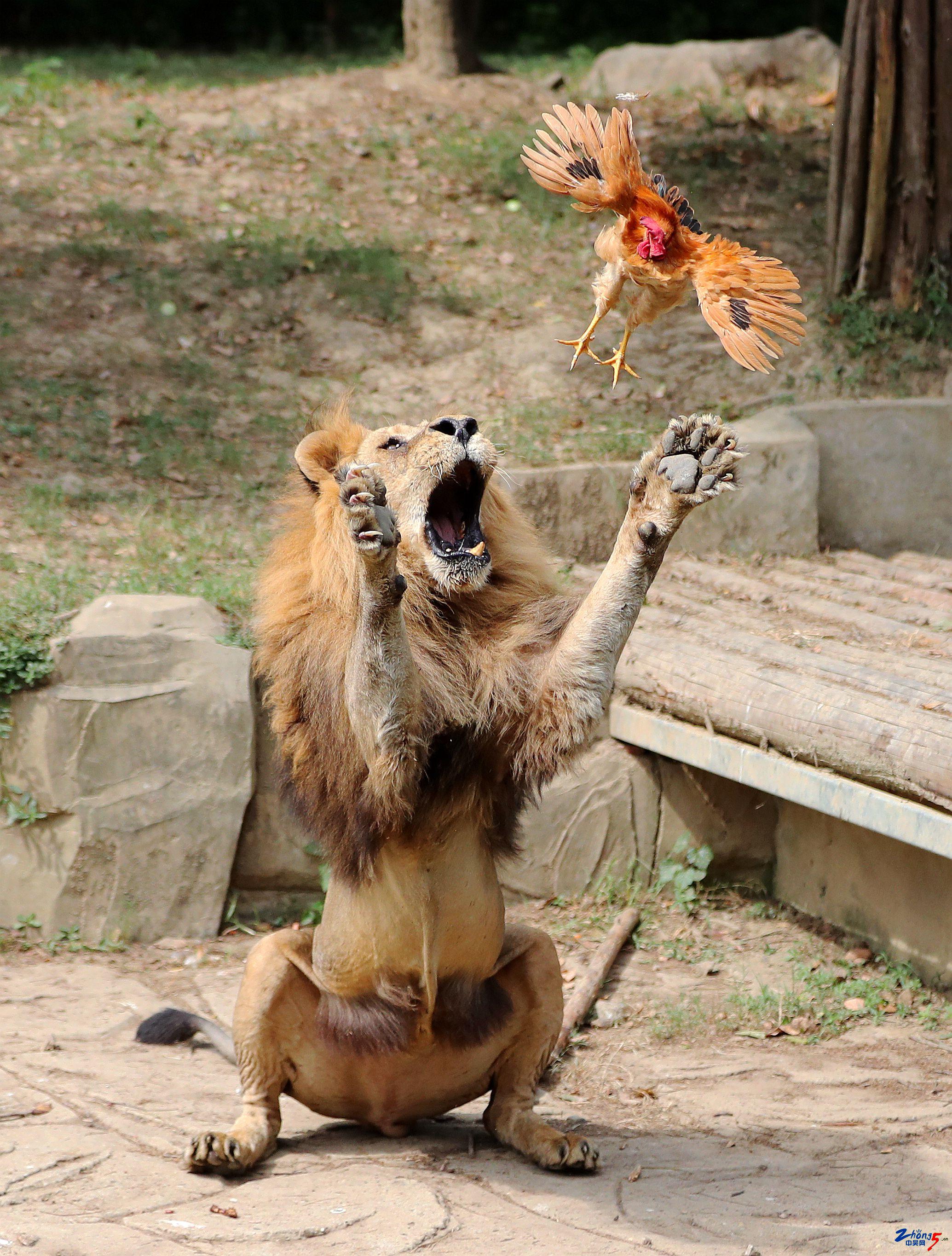 狮子大开口 李维明.jpg