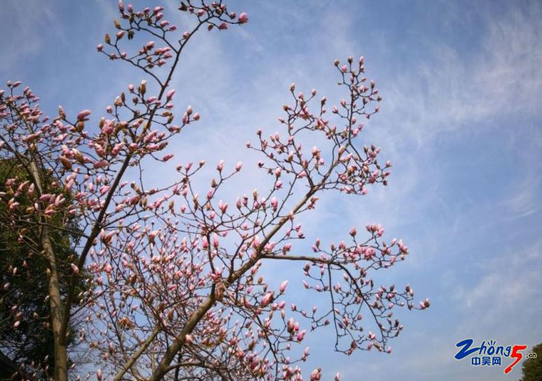 阳光明媚,岁月静好,随手拍了家门口的青枫公园,感觉挺不错的