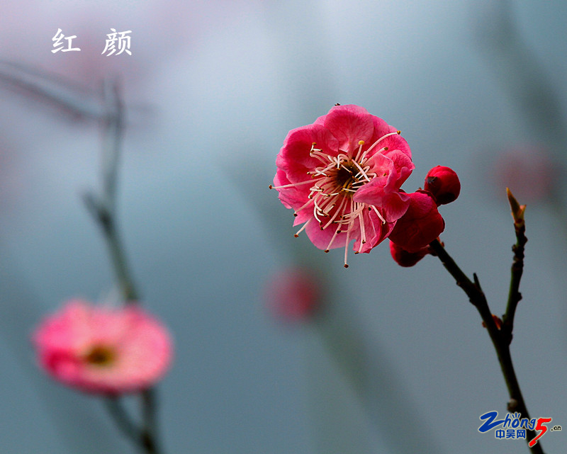 迎春(4).JPG