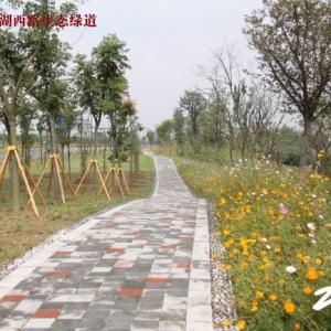 延政路-环湖西路生态绿道
