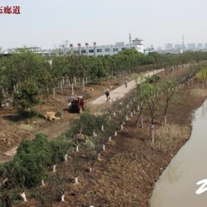 藻江河生态廊道