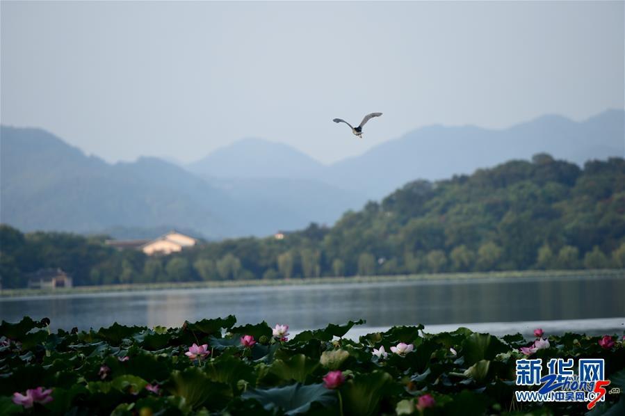 聚焦G20:西湖之晨