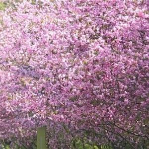 清明假期徜徉花海漫步花园城市 常州市民幸福满满