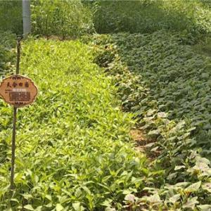 """手机APP上认养菜园 常州高新区企业转型""""突围"""""""