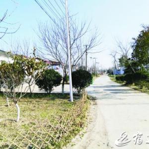 宿迁485个村创建成省级绿化示范村