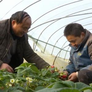 【网络媒体走转改】常州农业生产全环节监管无缝对接