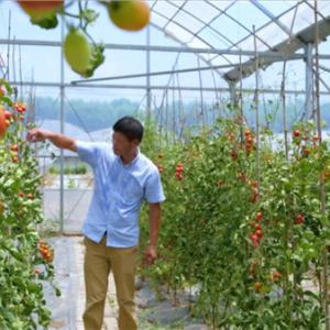 亮出园艺生产全程生态链 打造省级认证新高地