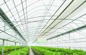 【新春走基层】转型升级用力巧 白兔草莓卖得俏