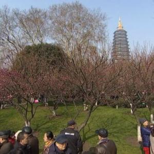 花开正当时 第十二届常州市梅花节开幕