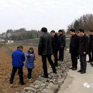 白河县引进溧阳白茶进行种植生产