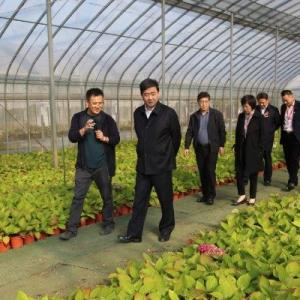 汪泉调研全市现代农业工作时强调 以科技创新引领农业现代化