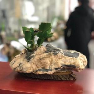 从旬阳到常州:石头变形记