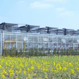 让美丽经济在农业现代化中绽放新活力